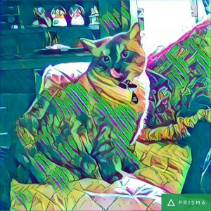 Prisma application