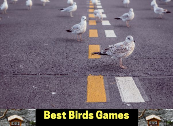 Best Birds Games For Android To Create An Aviary And Have to Take Care